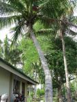 20 Coconuts-5853