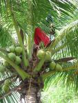 20 Coconuts-5854