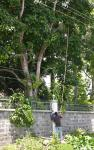 23 Tree trimmers-L1291809