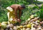 24 Coconuts-L1291832