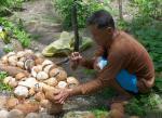 24 Coconuts-L1291843