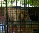 29 Subic Safari-L1292509
