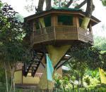 31 Tree House-L1292732