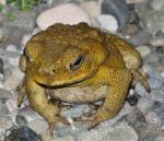 39 Frog-6757