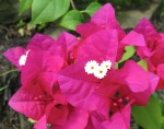 56 Flowers-7763