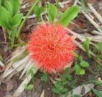 68 Flower-DSCF1051