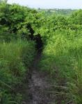 71 Hike-DSCF1520