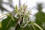 73 Flower-L1295380