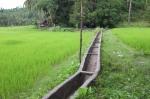 75 Rice-DSCF1866
