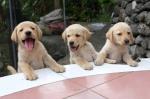 94 Puppies-DSCF3864