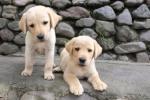 94 Puppies-DSCF3874