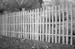 142 Fence-DSCF3390