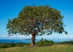 142 Tree-DSCF3481