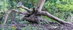 143 Tree-DSCF3525