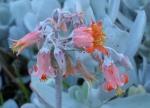 146 Flower-DSCF3810
