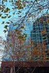 166 Leaves-DSCF6045