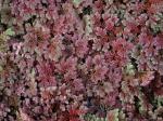 178 Plants-DSCN0581-1