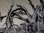 178 Trees-Dscn0566-1