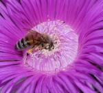 191 Bee-XT104822