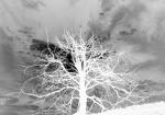 200 Tree-XT109624