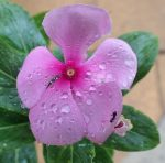 218-flowers-p2131508.jpg